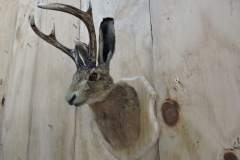 buck bunny side