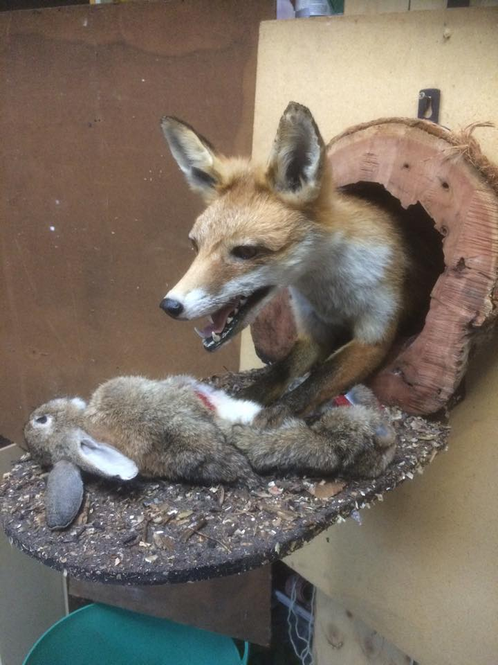 half_fox_rabbit
