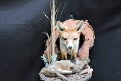 fox half2