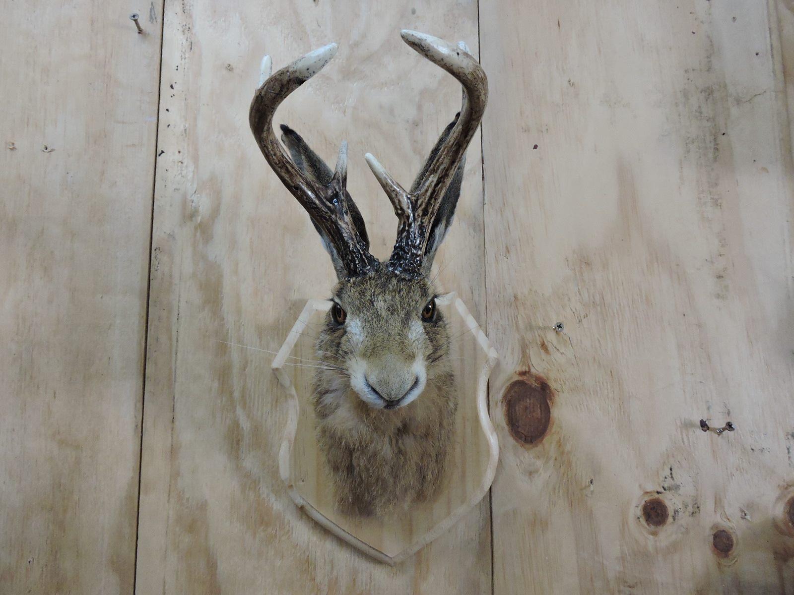buck bunny front