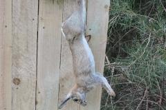dead rabbitt side