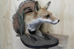 Fox-log